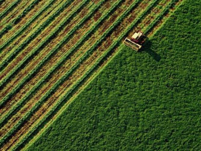 Informações Agropecuária
