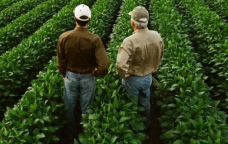 Obrigações periódicas do produtor rural